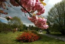Botanical Garden in Lodz